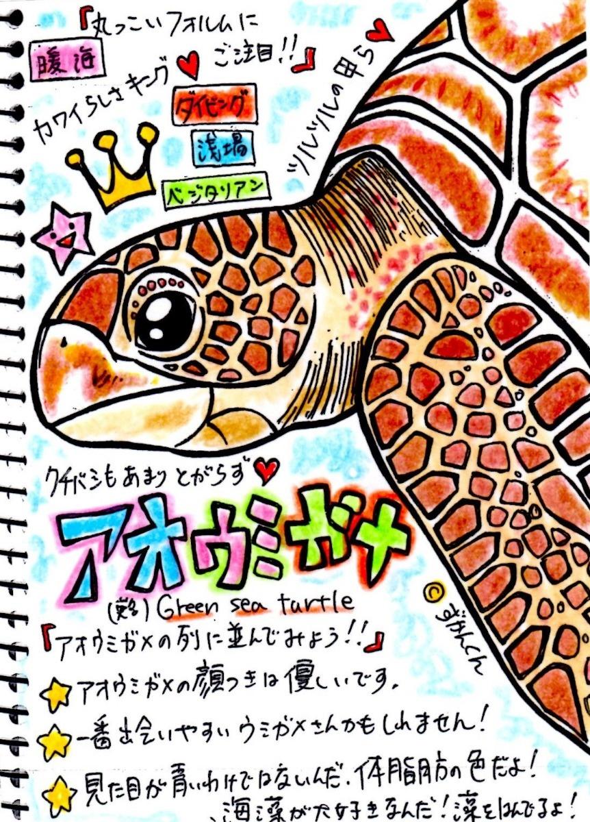 アオウミガメ】 ©zukankun ©Kyu Furumi | ウミガメ科 | evis生物図鑑 ...